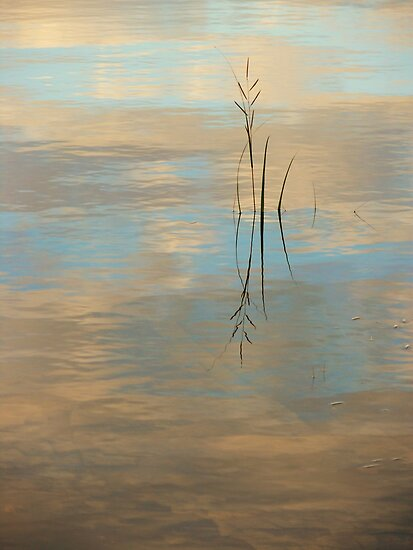 Serenity by Jeannine St-Amour