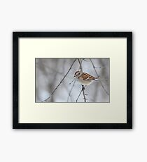 The tree sparrow Framed Print