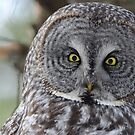 Watching you! by Jeannine St-Amour