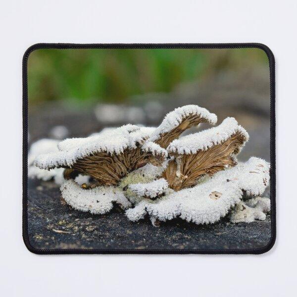 Schizophyllum commune - Split Gill fungus Mouse Pad