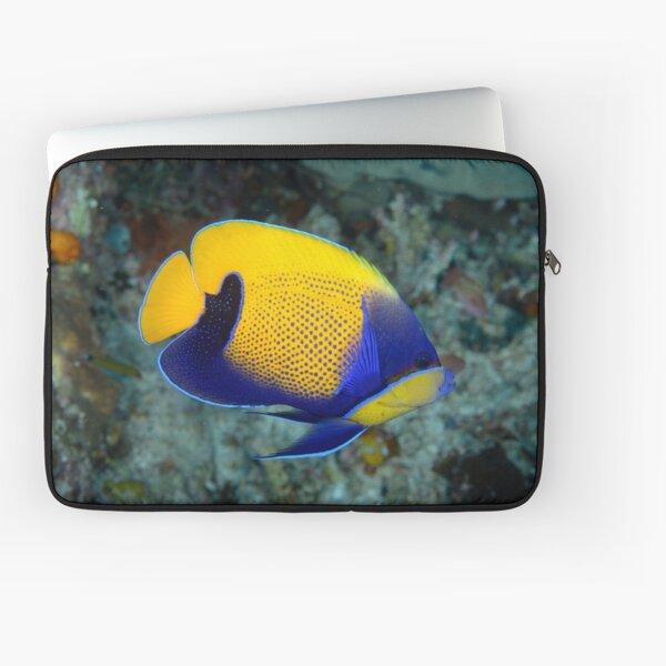 Majestic angelfish - Pomacanthus navarcus Laptop Sleeve