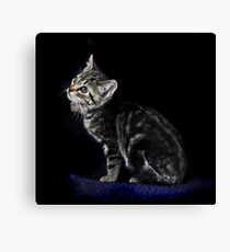 cat in blac Canvas Print