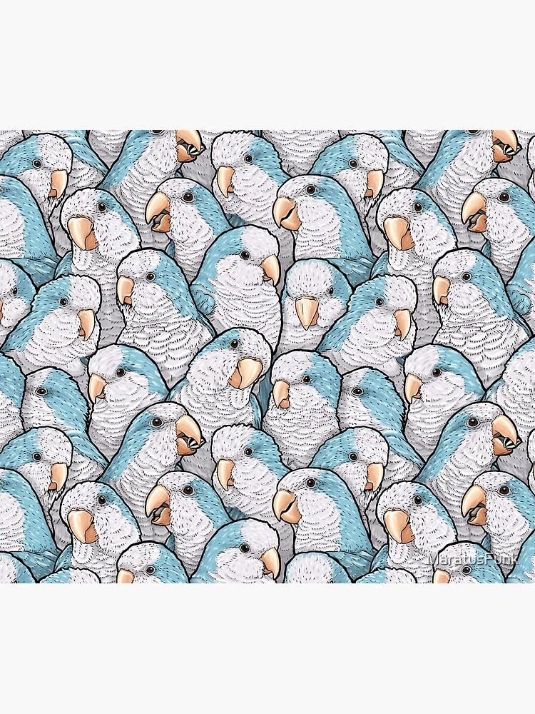 Blue Quaker Parrots by MaratusFunk
