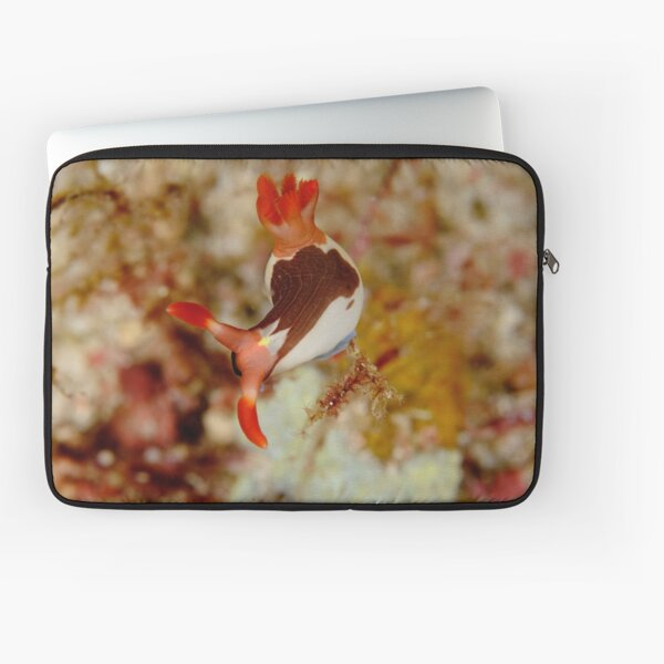 Nudibranch - Nembrotha chamberlaini Laptop Sleeve