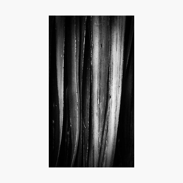 Pandani, Lake Dobson Photographic Print