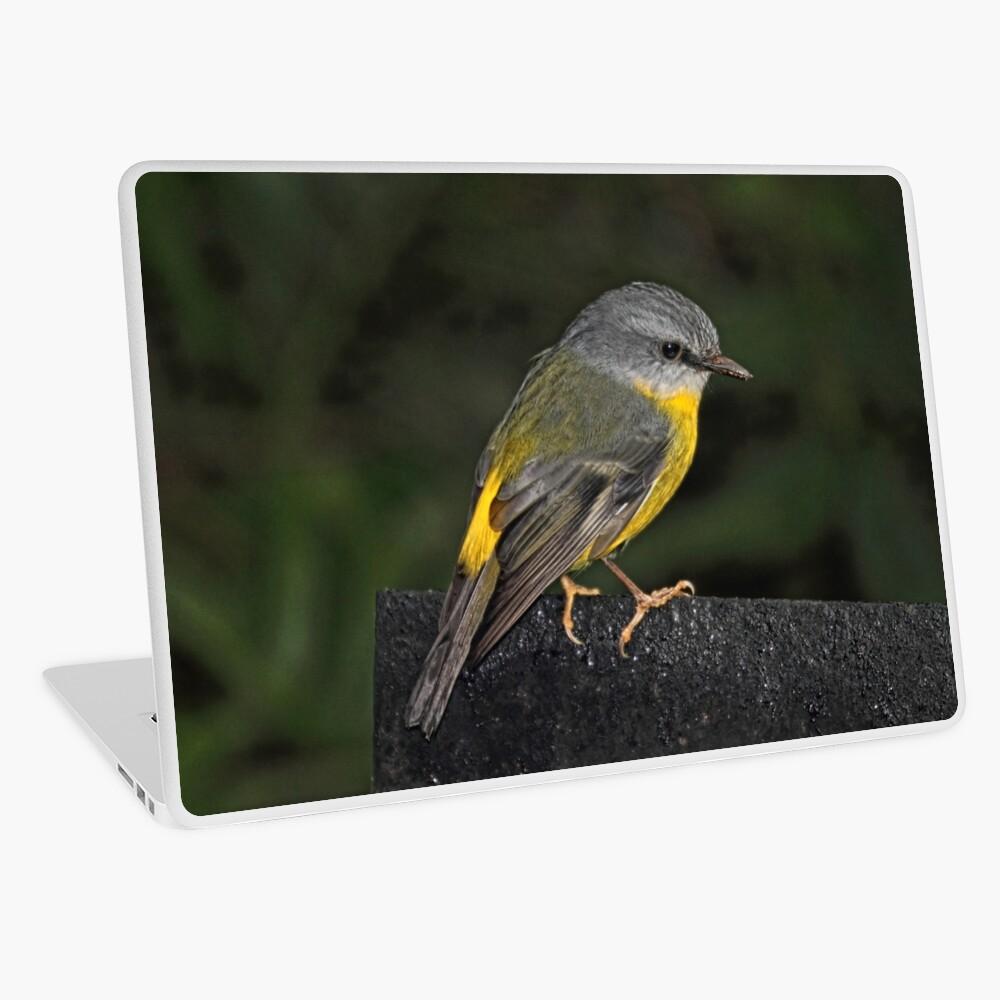 Eastern Yellow Robin Laptop Skin