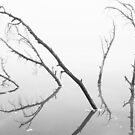 Branches Reaching Through the Ice by April Koehler