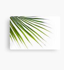 Exotic Palm tree 2 Canvas Print