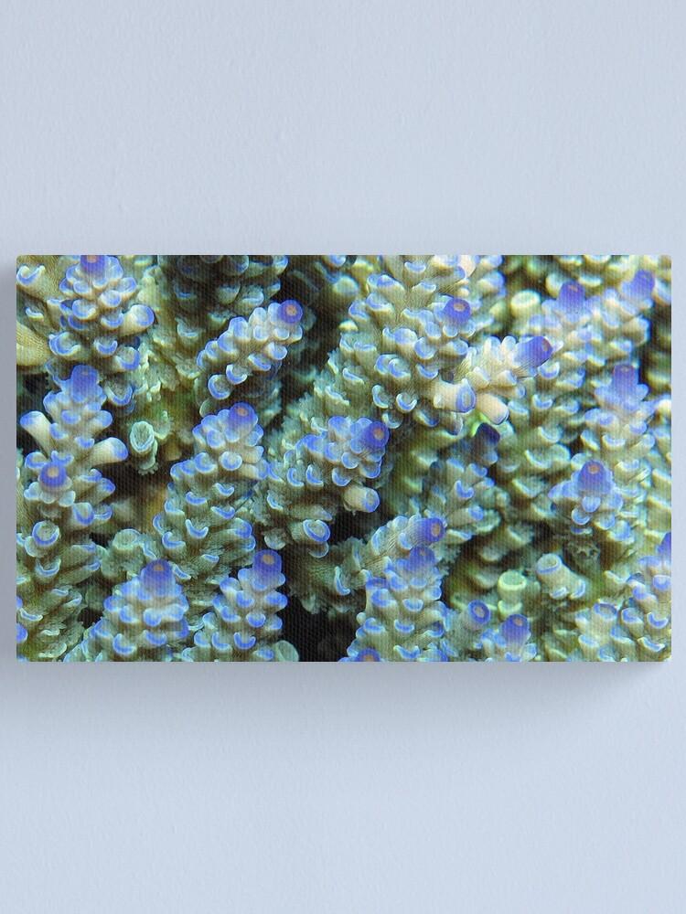 Alternate view of Blue Acropora at Wayag Canvas Print
