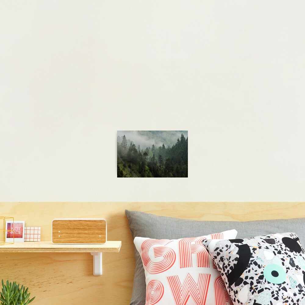 Morning mist in Jura forest Photographic Print
