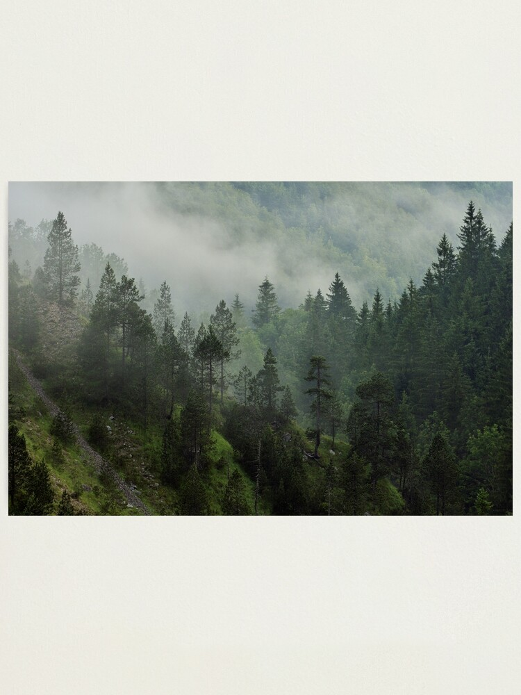 Alternate view of Morning mist in Jura forest Photographic Print