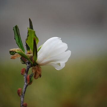 Blossom by CjbPhotography