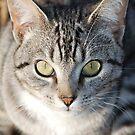 Bright Eyes by CjbPhotography