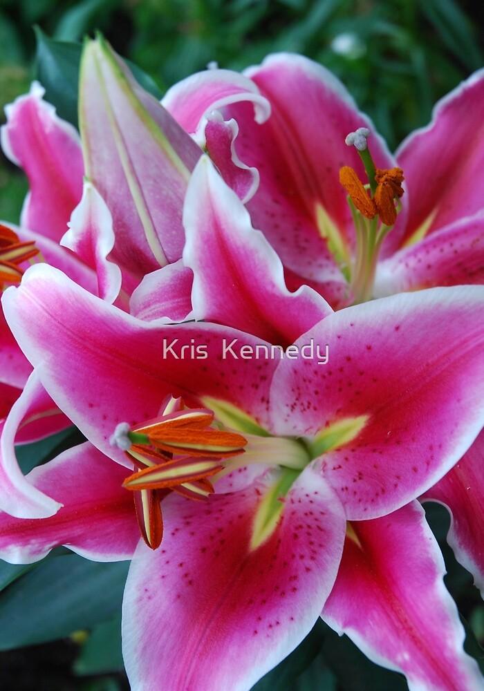 Oriental Lily by Kris  Kennedy