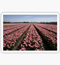Field of Tulips Sticker