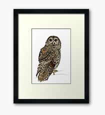 Barred Owl Tangle Framed Print