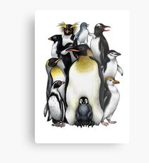 Penguin Obsession Metal Print
