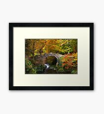 Tollymore Forest Park  County Down  Northern Ireland Framed Print