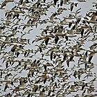 Snow Geese #2 by Trena S
