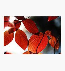 Fall Leaves II Photographic Print