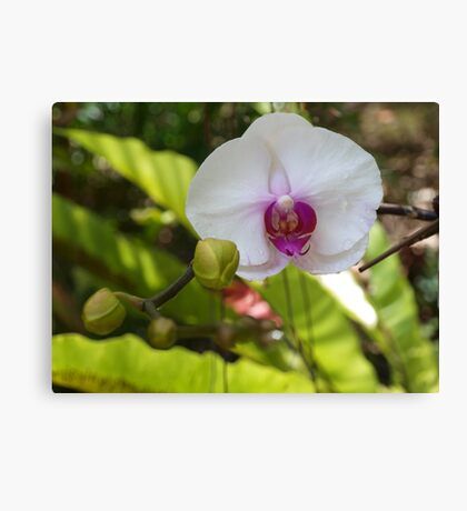 Summer Orchid  Canvas Print