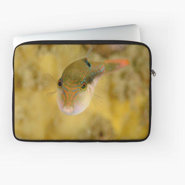 Bennett's Pufferfish - Canthigaster bennetti Laptop Sleeve