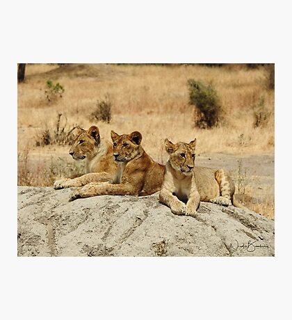 Hungry Eyes Photographic Print