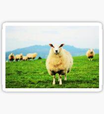 Ewe Lamb Sticker