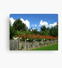 Red Hot Pokers - Hill End Canvas Print