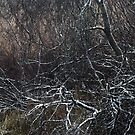 16.11.2016: Snow on Branches by Petri Volanen