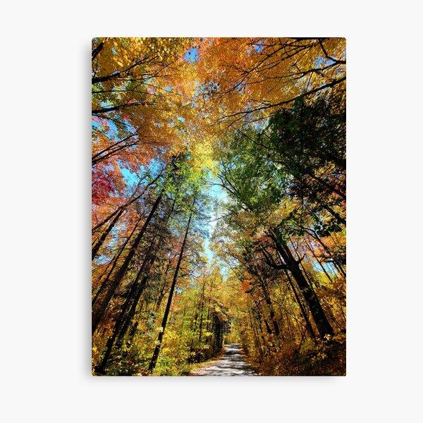 Itasca State Park on September 27, 2021 Canvas Print