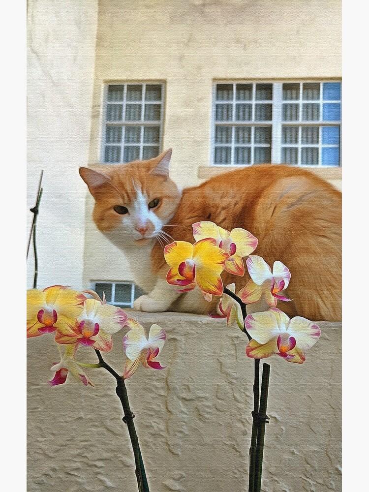 Cat Behind the Flowers by photorolandi