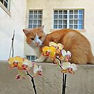 Cat Behind the Flowers by photorolandi