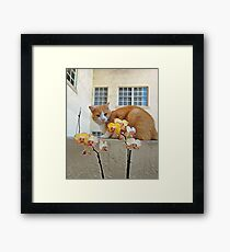 Cat Behind the Flowers Framed Print