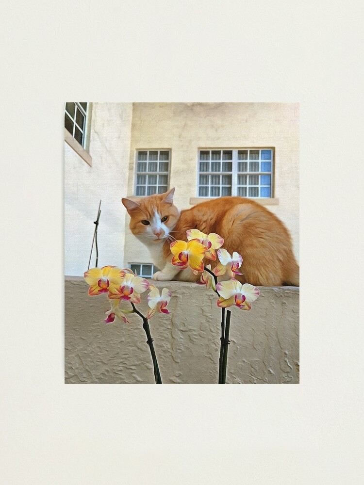 Alternate view of Cat Behind the Flowers Photographic Print