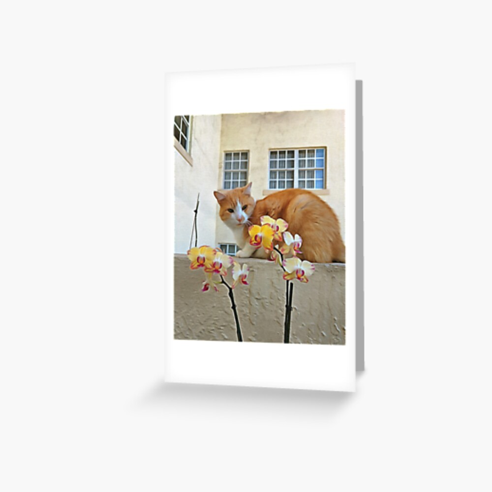 Cat Behind the Flowers Greeting Card