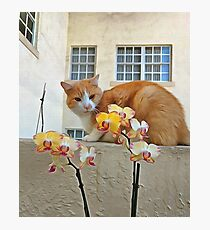Cat Behind the Flowers Photographic Print