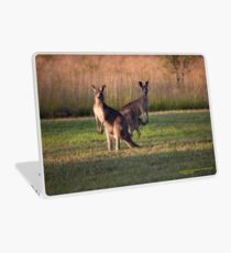 Kangaroos with Joey Late Afternoon at Vacy, NSW Australia Laptop Skin