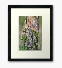 Spring Paintbrushes Framed Print