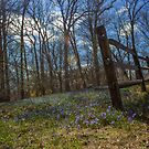 Wooden Fence   Cove Neck, New York  by © Sophie W. Smith