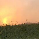Sunrise in the Fog by Kathi Huff