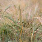Grain by Kathi Huff