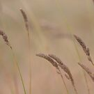 Grass Heads by Kathi Huff