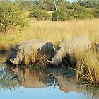 Rhino reflections ii by Anthony Goldman