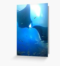 A pair of rays (manta rays) Greeting Card