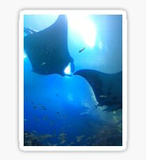 A pair of rays (manta rays) Sticker