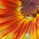 Sunny sunflower by ANNABEL   S. ALENTON