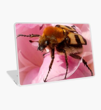 Bee beetle on peony Laptop Skin