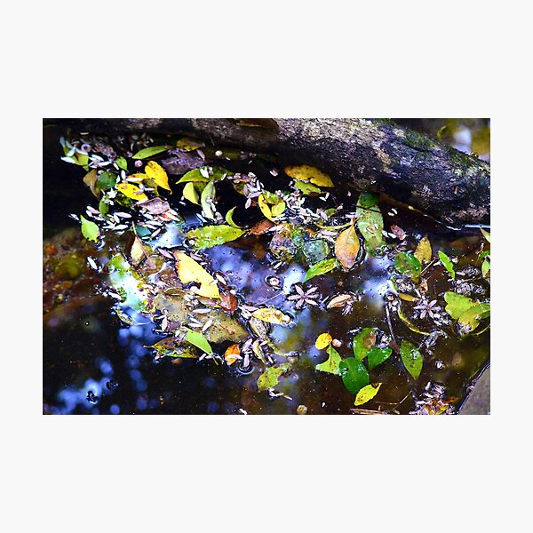 Stream Collection Photographic Print
