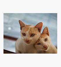COUPLE CATS Photographic Print